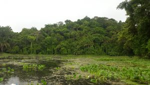 Rain forest taking over the margins of the Chagres river at Soberania National Park, Panama